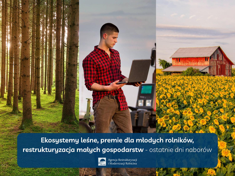 Ilustracja do informacji: Ekosystemy leśne, premie dla młodych rolników